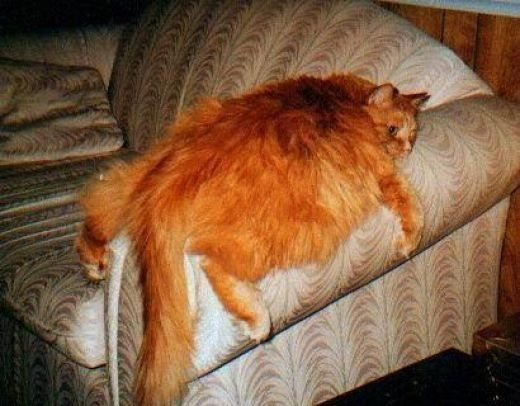 A Bunch Of Fat Cats News