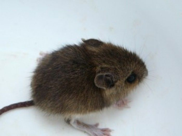 Oregon man gets plague after taking mouse from a cat's mouth