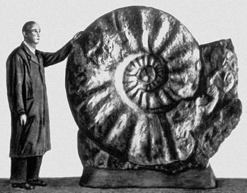 Man compared to ammonite