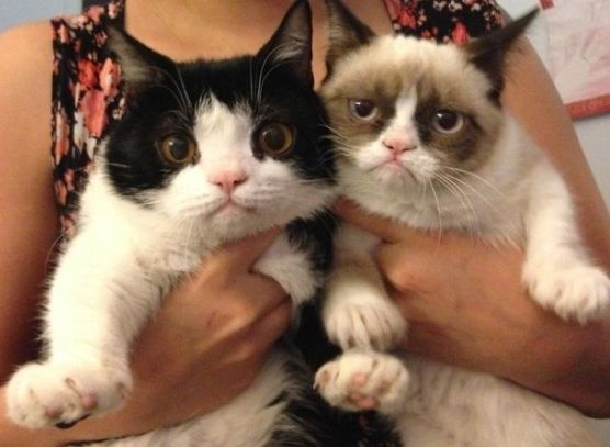 Grumpy Cat and Brother