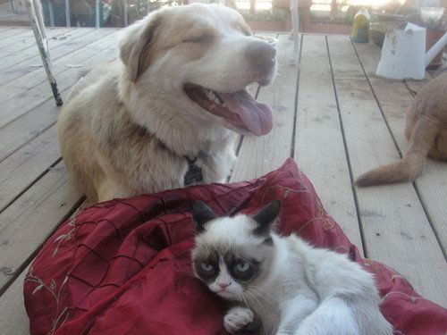 Grumpy Cat with dog
