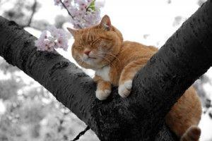 https://theorderoftheironphoenix.com/wp/wp-content/uploads/2013/01/Animal-Healing-Powers-One-300x200.jpg