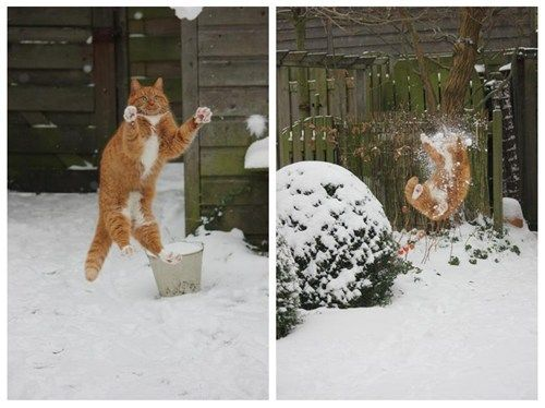 never throw snowballs at your cat