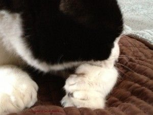 Why do cats get double paws?