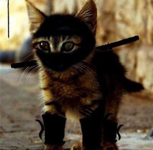 ninjacat 5