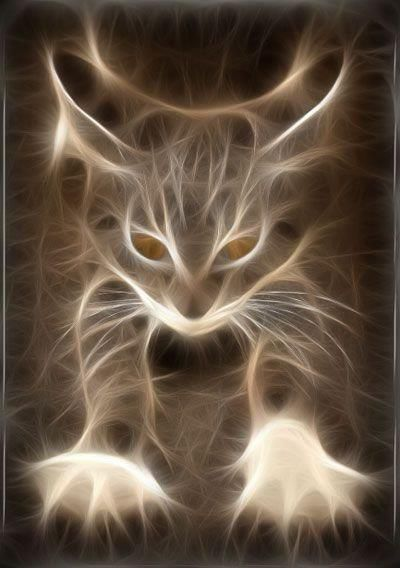 Cats Also Have Auras