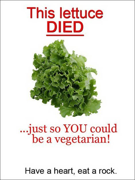 This lettuce died because of you