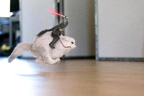 Darth Vader rides a flying cat