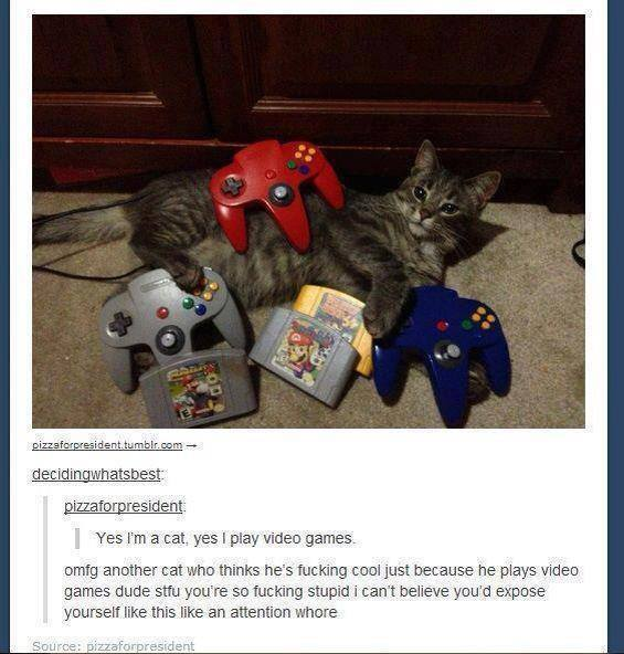 cat plays video games