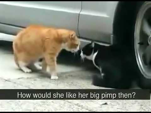 Jealous cat yells at boyfriend cat
