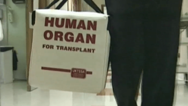 Human organ carrying case