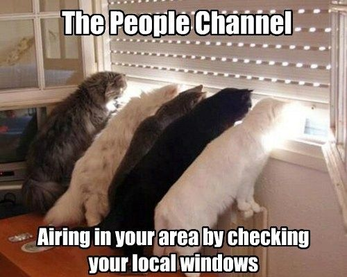 cats watching people