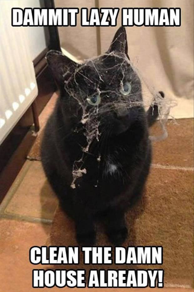 cat covered in web