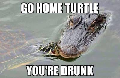 Go Home Turtle Youre Drunk