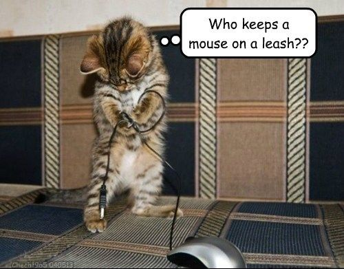 who keeps a mouse on a leash