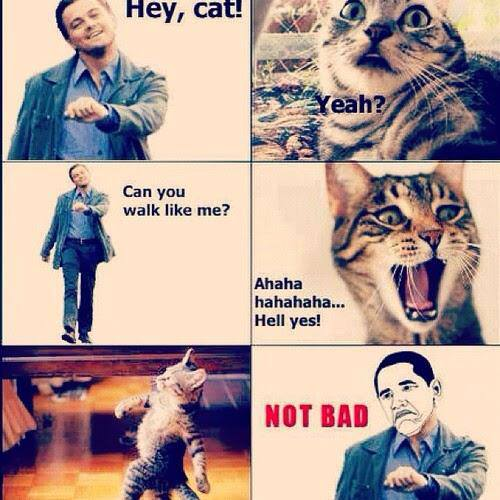cat walks like Leonardo DiCaprio